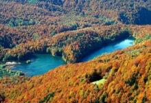 Photo of Национальный парк Биоградская Гора (Biogradskagora)