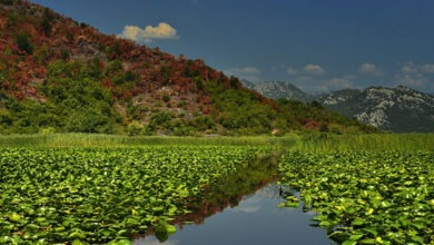 Photo of Экскурсия «Скадарское озеро + река Црноевича» (вечерняя)